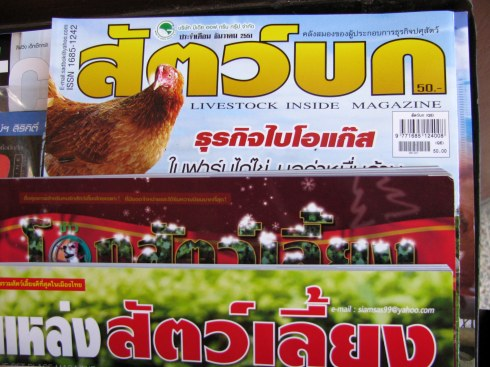 Magazine stand, Bus station, Chiang Mai, Thailand