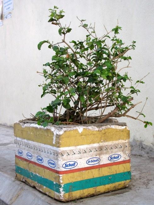 Street planter, Phnom Penh, Cambodia