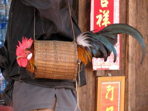 Rooster manpurse, Ratanakiri Province, Cambodia